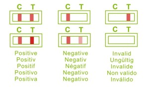 lh_cassette_results_multi_language