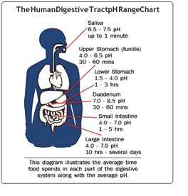 urine ph 6.5 pregnancy
