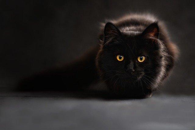 cat retirement home