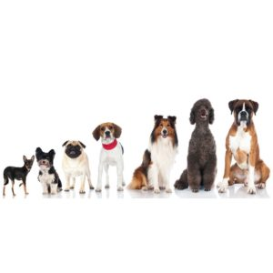 group picture of domestic dogs
