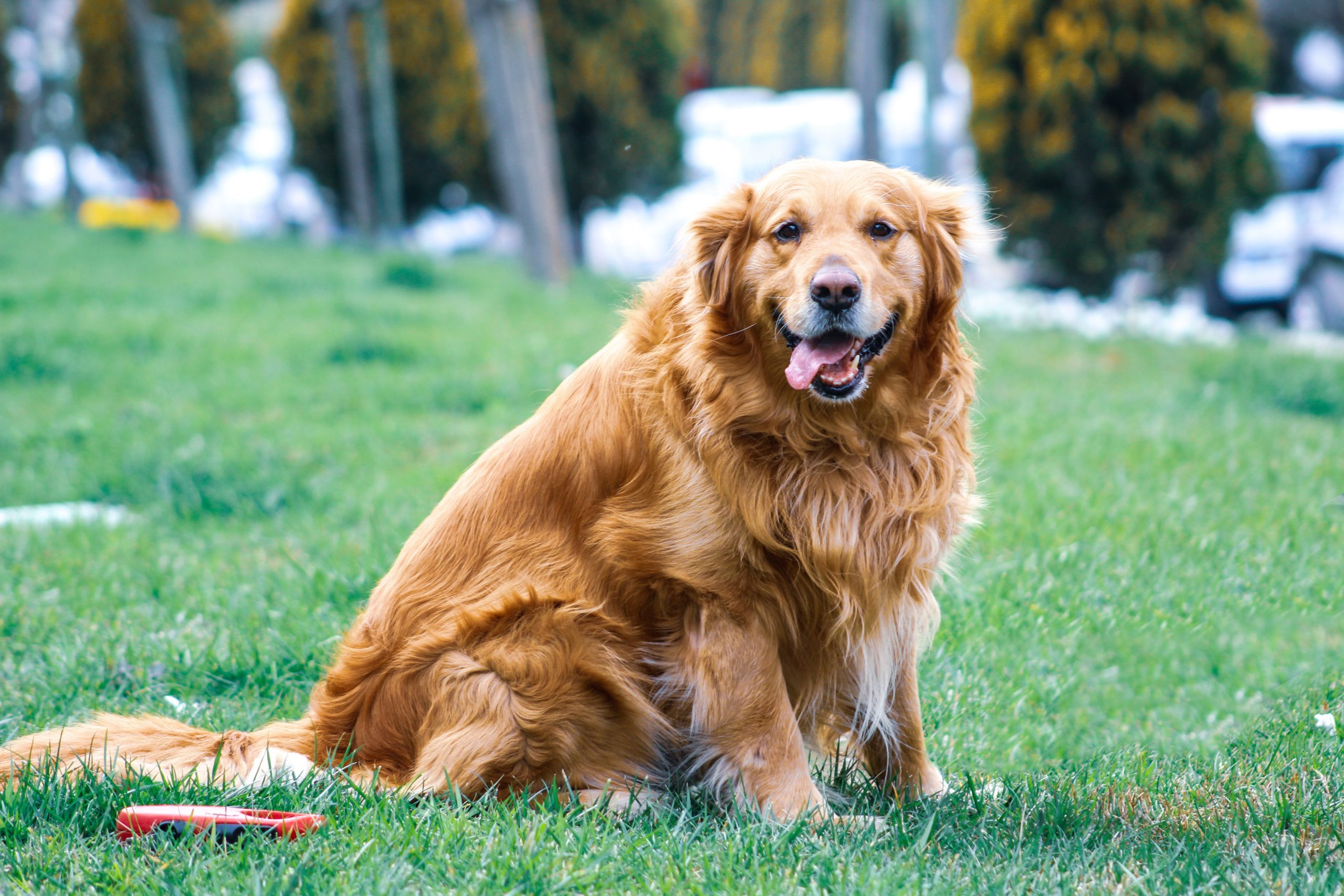 overweight pet health tests