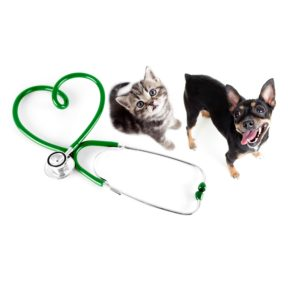 Pet Tests & Medicines